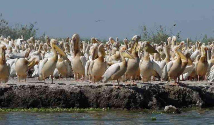 حديقة الطيور دجودج في السنغال