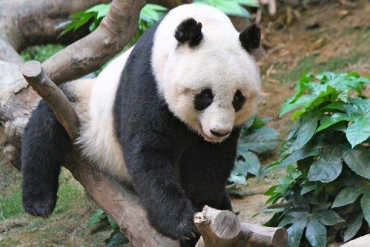 حديقة حيوان غوانزو