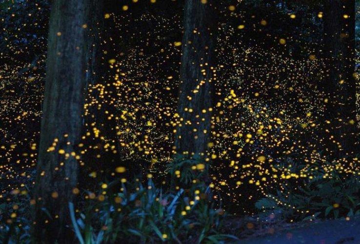 حديقة الفراشات المضيئة