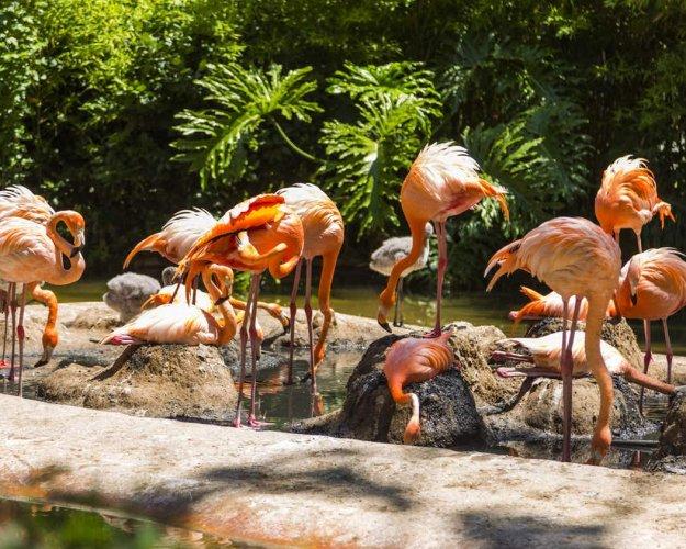 حديقة حيوانات برشلونة.