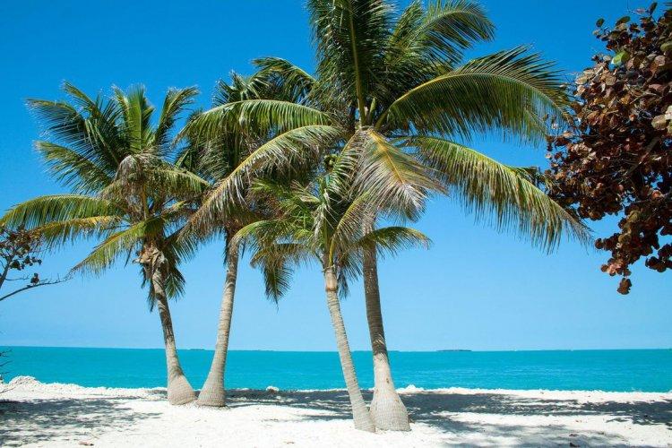 فلوريدا كيز
