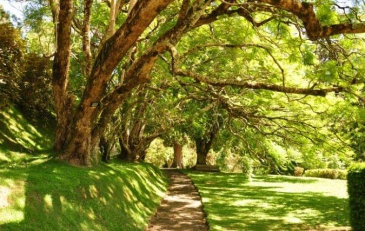 اجمل الاماكن السياحية في نوراليا حديقة هاكغالا النباتية