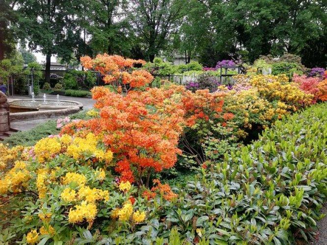 حديقة الورود (روزينجارتن) في سويسرا