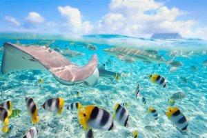 الطبيعة الخلابة في جزر كايمان