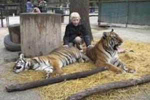 مشاهدة النمور داخل حديقة لوجان