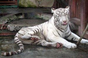 حديقة حيوانات يكاترينبورغ