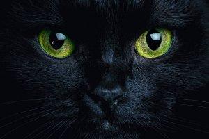 القط الاسود رمز السحر والشيطان