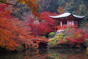 السفر إلى كيوتو