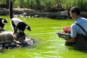 حديقة حيوانات لاغوس