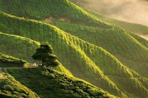 مرتفعات الكاميرون