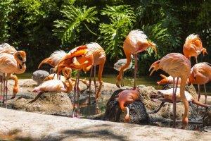 حديقة حيوانات برشلونة