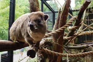 حديقة حيوانات ارتيس