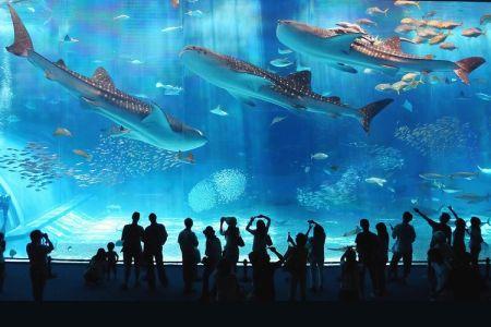أكبر حوض اسماك في العالم