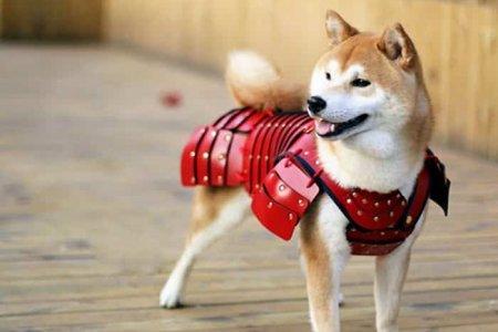 أحد الكلاب يرتدي يورى