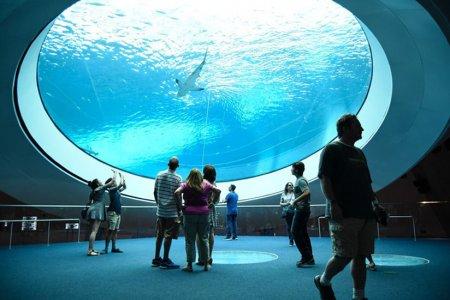 """متحف """"فيليب وباتريشيا فروست"""" للعلوم وسط مدينة ميامي"""