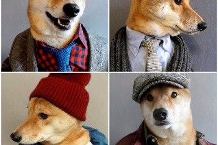 الكلب Bodhi عارض الأزياء