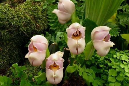 زهرة الرضيع المتلحف من اغرب الزهور في العالم
