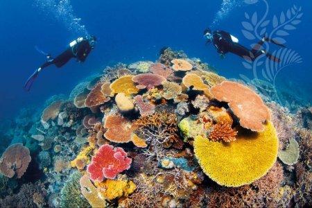 الغوص بجوار الشعاب المرجانية