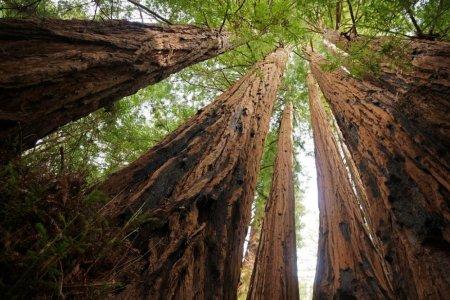 اغرب 4 غابات في العالم