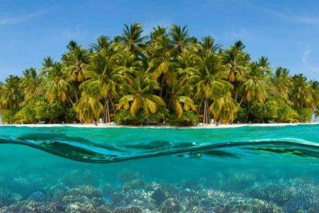 الحياة البحرية في المالديف