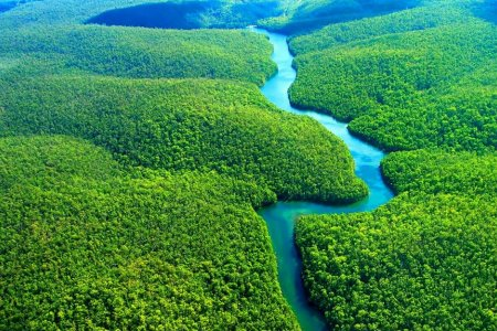 الغابات الاستوائية المازون