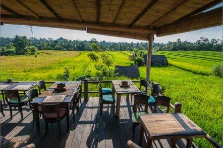مطاعم نباتية عند السفر الى بالي