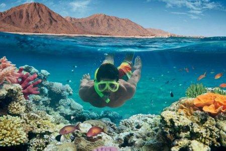 الشعاب المرجانية في دهب