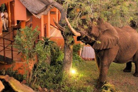 الأفيال في ثاندا سفارى