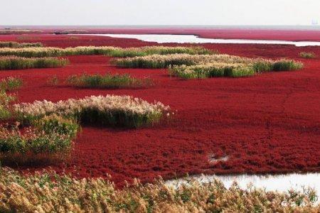 الشاطئ الأحمر اجمل شواطئ العالم