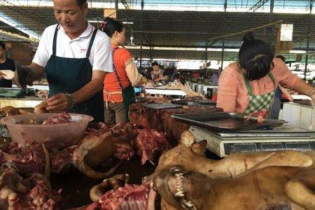 مهرجان اكل لحم الكلاب فى مدينة يولين