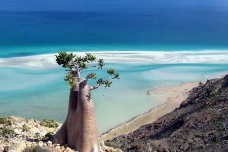 جزيرة سقطرى اغرب مكان في العالم