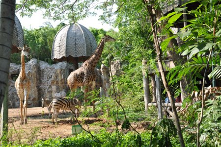 حديقة حيوانات دوسيت ببانكوك