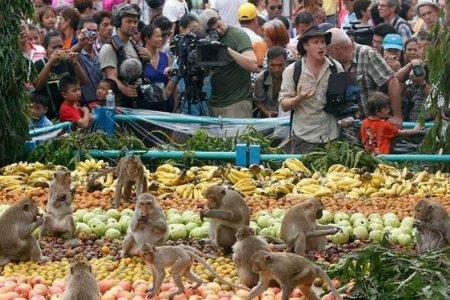 مهرجان القرود في تايلاند