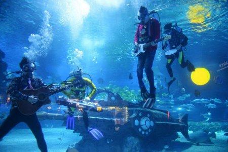 مهرجان الموسيقى تحت الماء