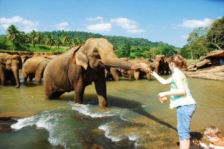 الأطفال يستمتعون مع الحيوانات البرية