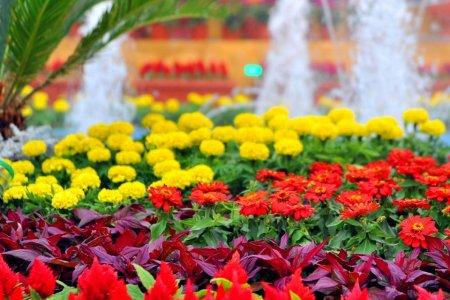 الزهور المختلفة بمهرجان الربيع