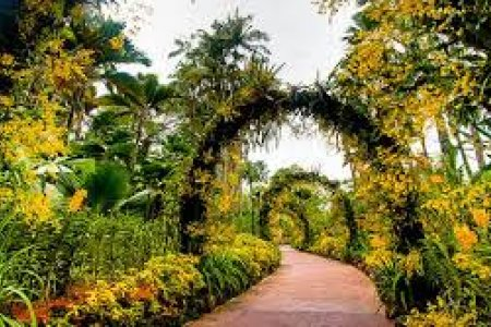 حديقة الزنجبيل في سنغافورة