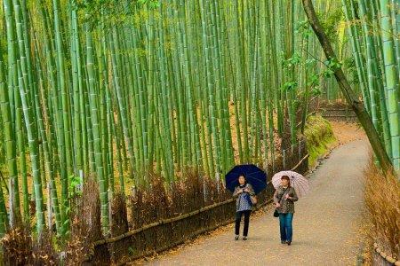 اشجار البامبو في الحديقة النباتية