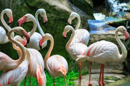 حديقة الطيور في كوالالمبور