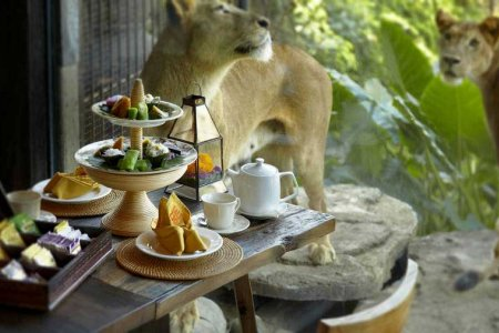 مطعم WANA Restaurant Bail Zoo