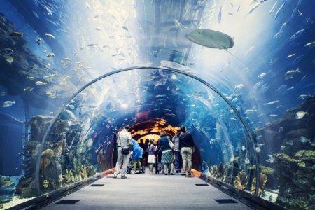 السياح في أكواريوم دبي مول