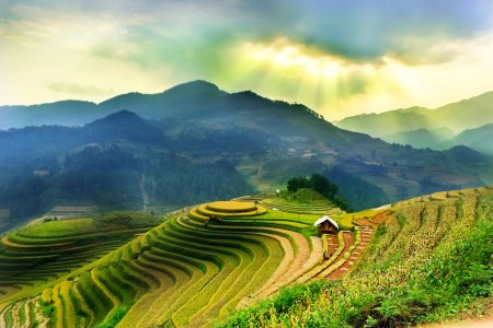 حقول الأرز في سابا التي تقع في فيتنام