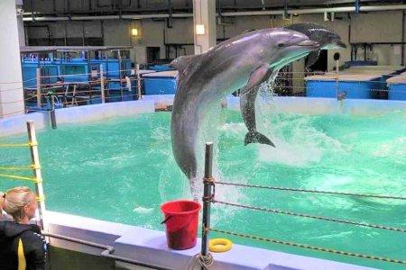عروض الدلافين في حديقة حيوان موسكو