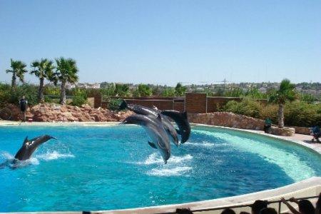 عروض الدلافين في حديقة حيوانات اتيكا