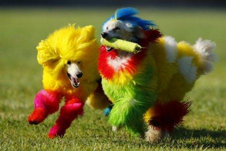 كلاب ملونة
