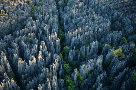 غابة الاحجار
