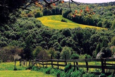 قرية بولونيز كوي