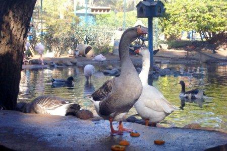 حديقة وادي الطيور في أكادير