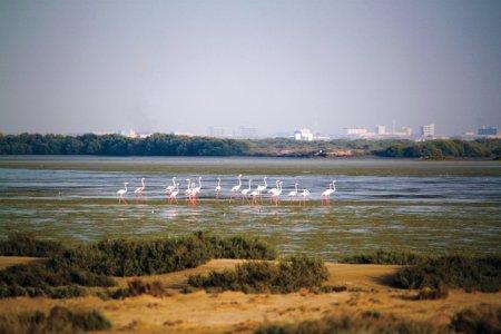 طيور جزيرة السينية في أم القيوين