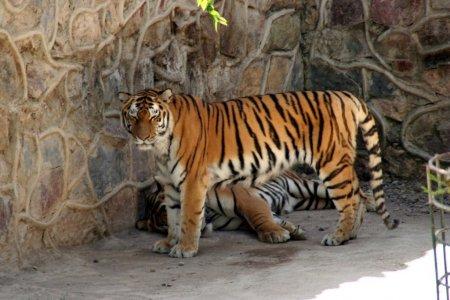 حديقة حيوان طشقند